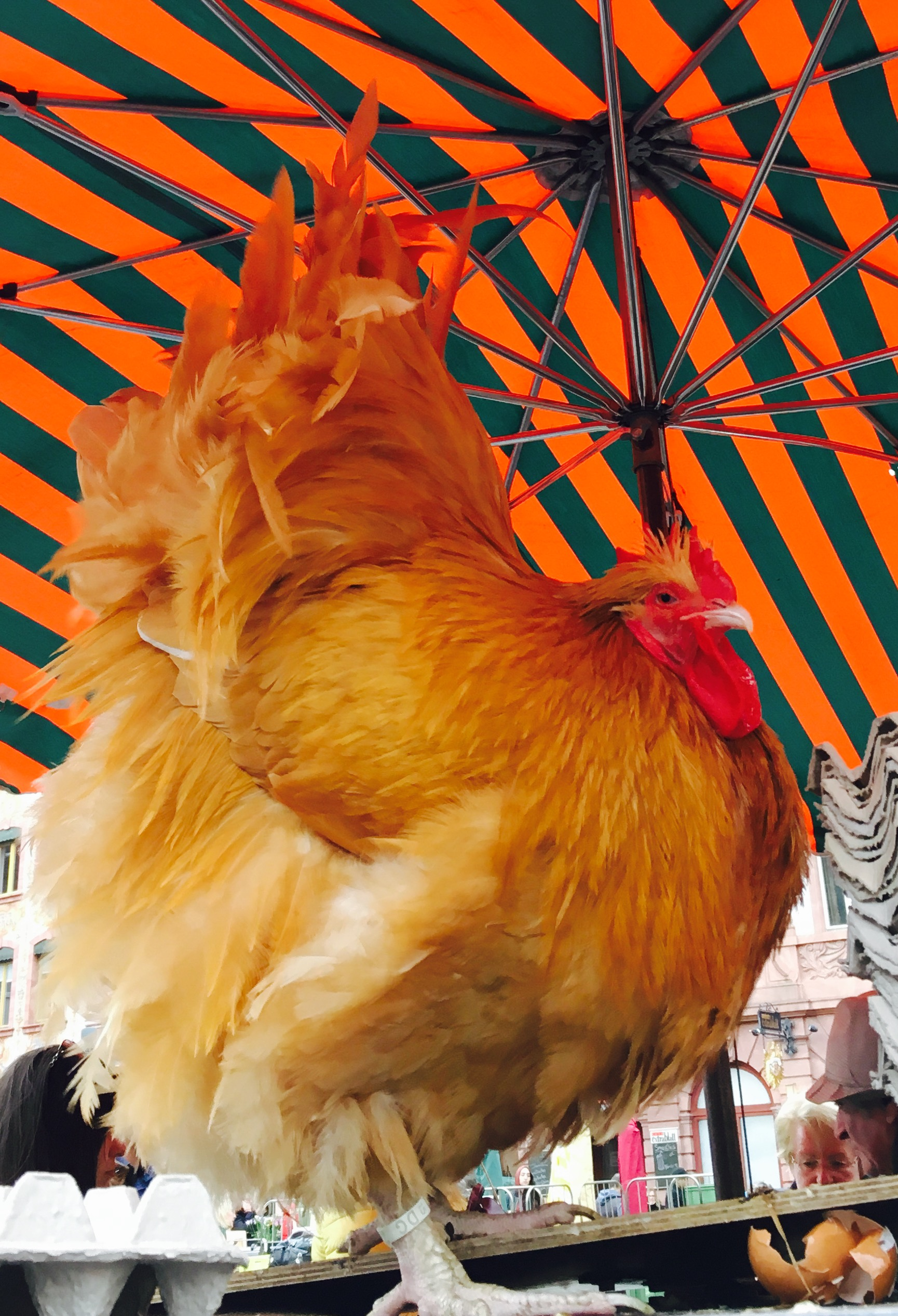 The Mainz Market Hen: Remembering My Days in the Pen